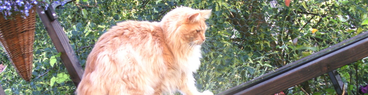 Katt på nätad balkong.