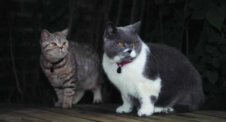 får katter gå lösa utomhus