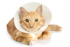 fråga veterinären katt