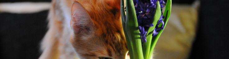 plantes toxiques et chats