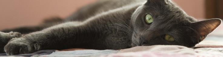 Katt vilar.