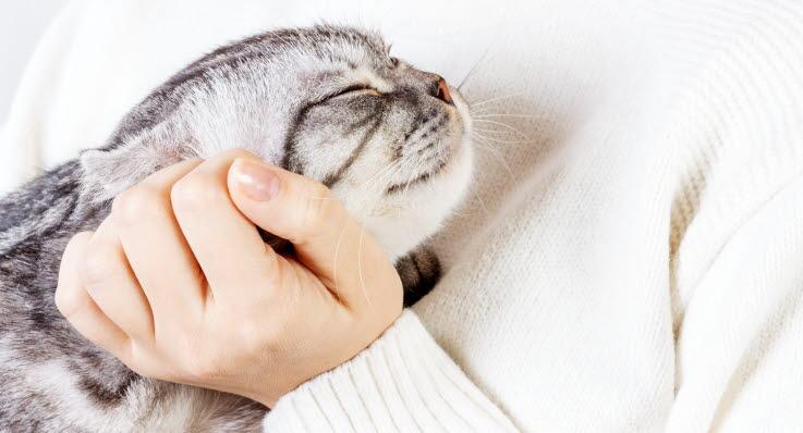 katten sover på mitt ansikte