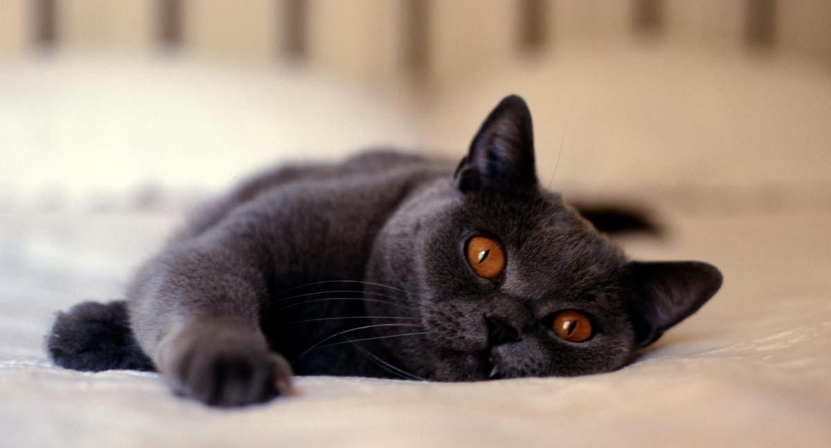 katten kräks mask