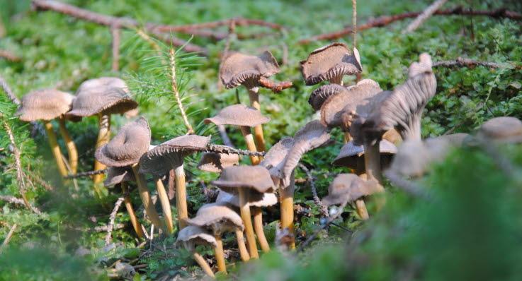 recipe: svampar i gräsmattan bilder [22]
