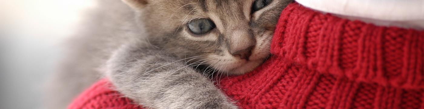 Emposionnement du chat