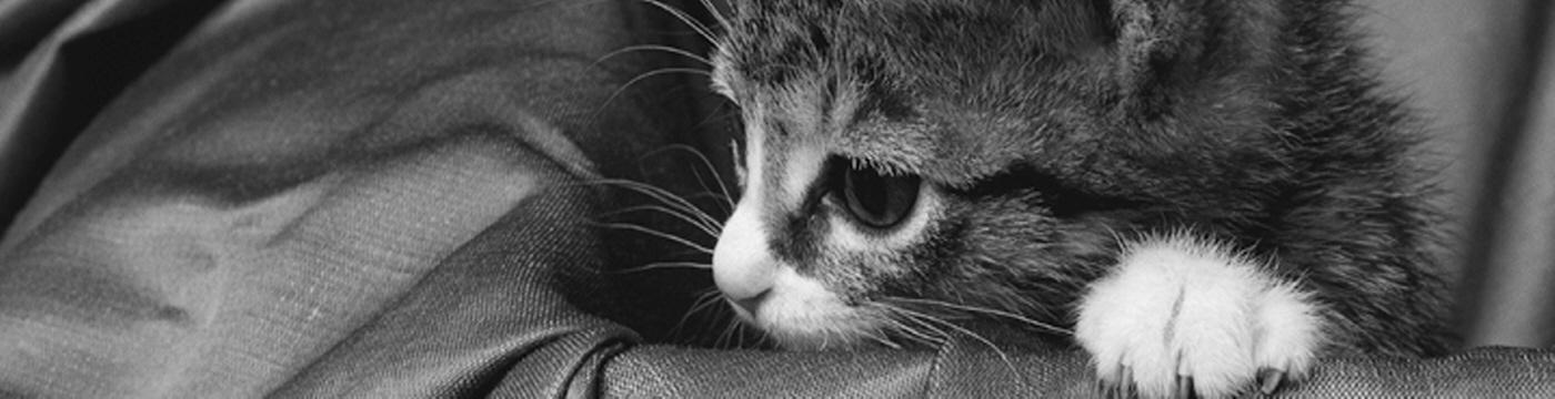 Environnement du chat