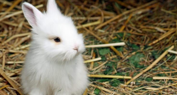 hur mycket mat ska en kanin ha