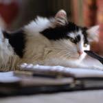 njurproblem katt symtom