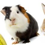 svart kön hamster Rumänska Teen sex