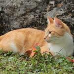 katt med hosta