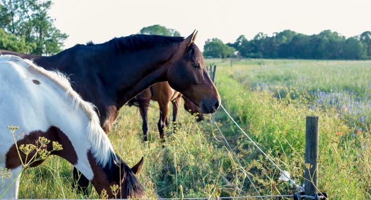 Hästar på sommarbete