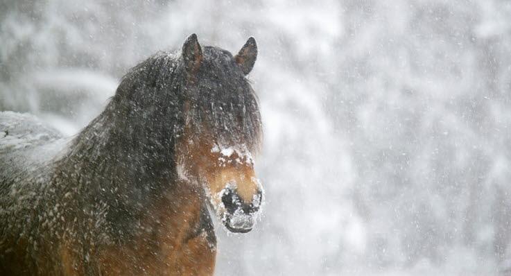 Bildresultat för häst i snö