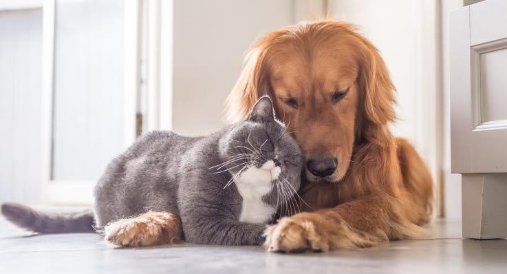 Agria Stödjer Forskning Om Hundar Och Katter Agria Djurförsäkring
