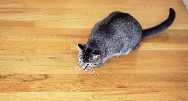 mask i magen katt symptom
