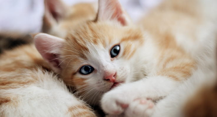 hemlösa katter i nöd