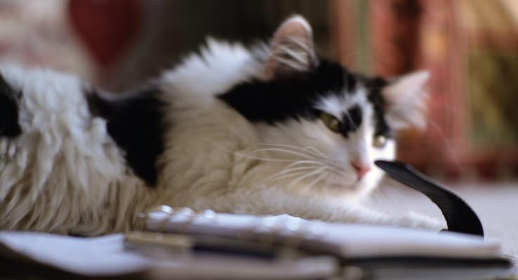 Katt kan ge din bebis eksem