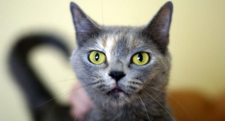 svart gegga ögon katt