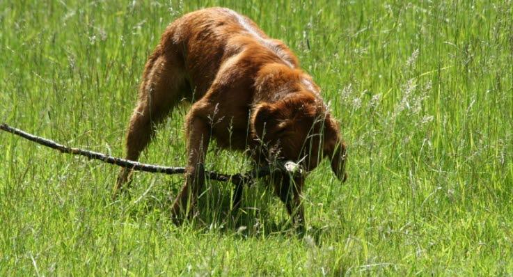 Saknad hund dok upp efter tio ar