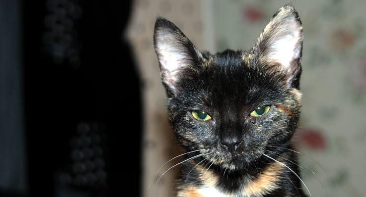 Katten jamar på natten – så löser du problemet - Agria Djurförsäkring 9fae7117727b0