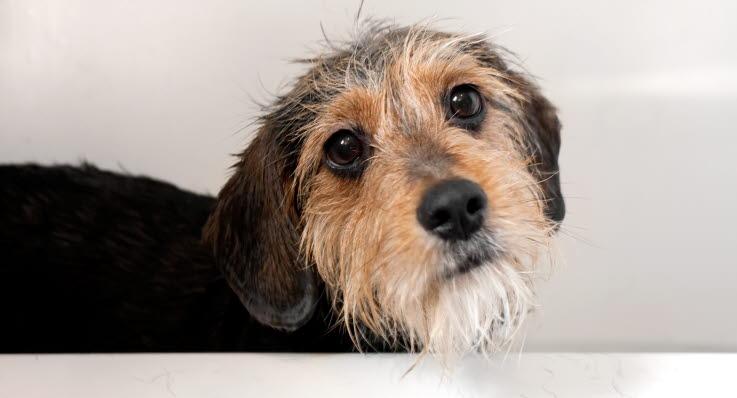 Det har galler om din hund biter nagon