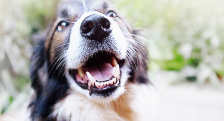 Fakta och råd om hundar från Agria Djurförsäkring - Agria Djurförsäkring