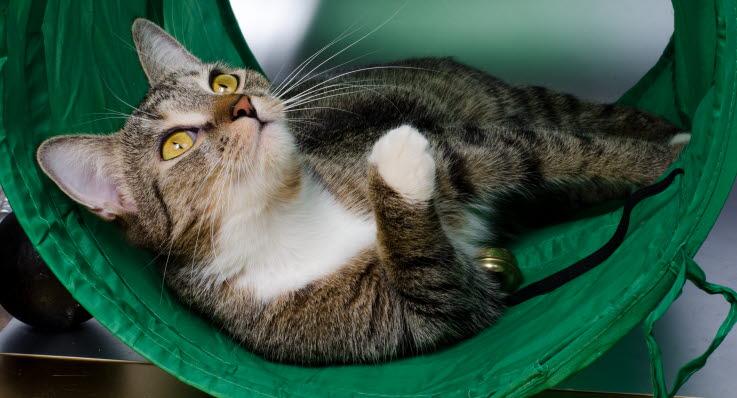katt ont i svansen