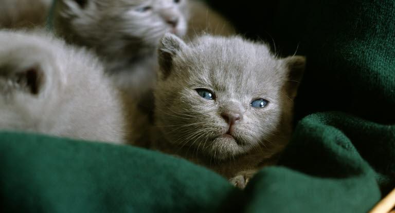 kattunge med diarre