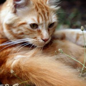 Agria Djurförsäkring Katt