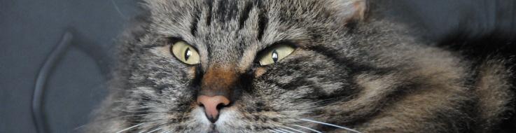 Vibrisses chats