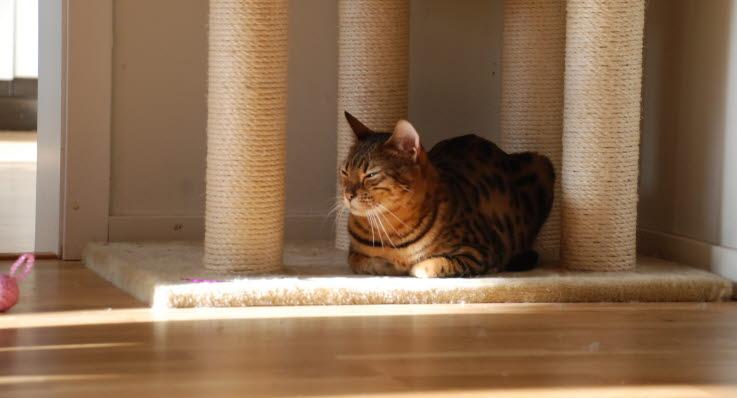 katter som klöser