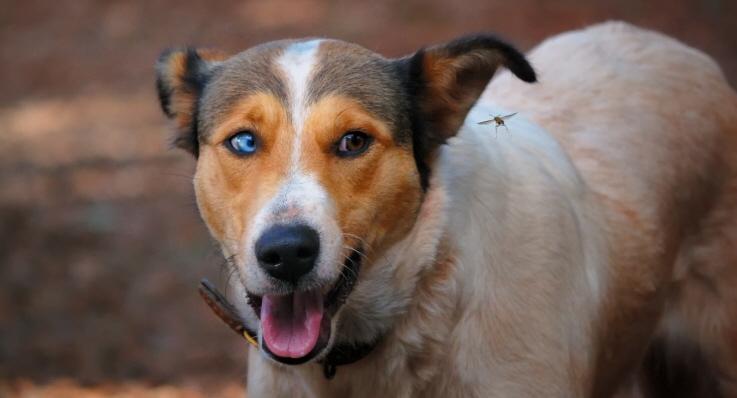 Getingstick på hund är oftast ofarligt - Agria Djurförsäkring