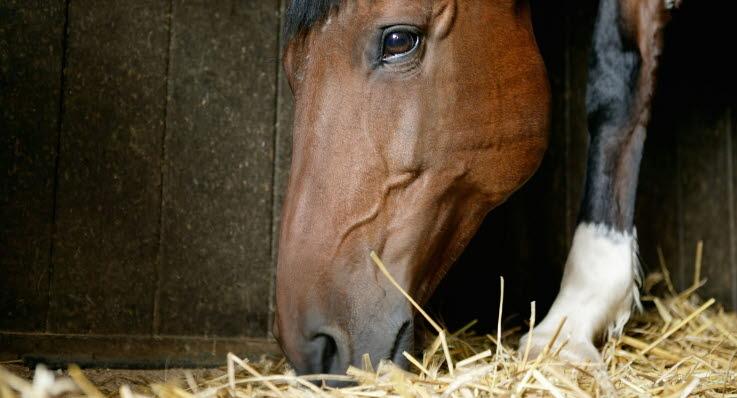 vaccination häst över tiden