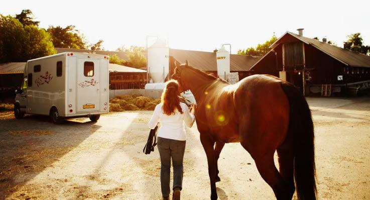 bli fodervärd häst
