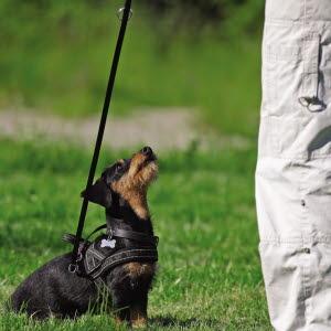 Se hunden som tar en tur i bilen