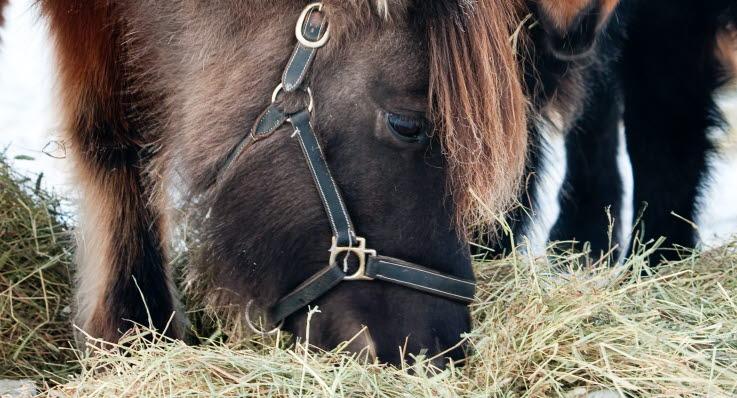 räkna ut foderstat häst