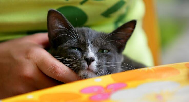 vad är farligt för katter att äta