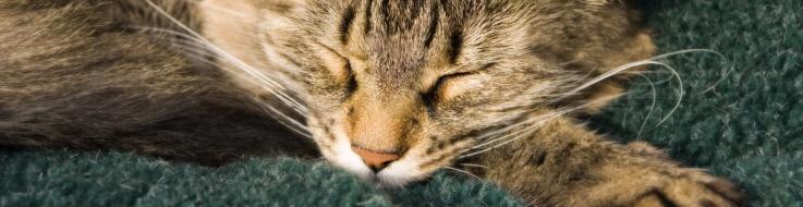 Katt som är sjuk och ska avlivas.