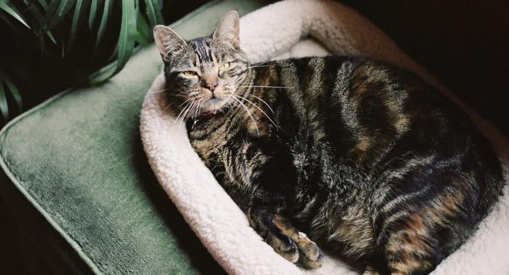 katten kissar i sängen när vi sover