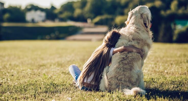 En hund med kennelhosta kan behöva extra omvårdnad.