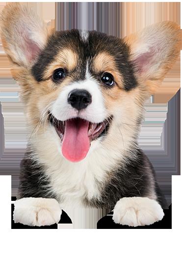 Djurförsäkring för hund dd1995d771026