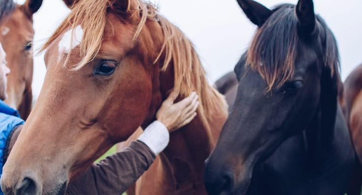 Så undviker du smitta hos häst
