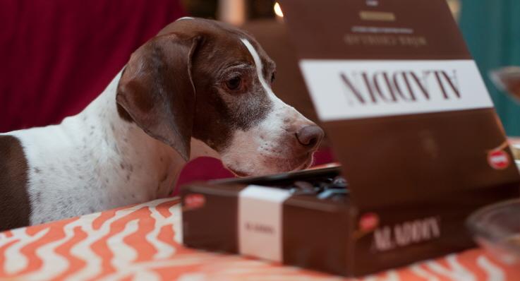 hund choklad