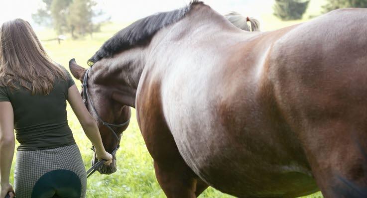 vad är kolik häst