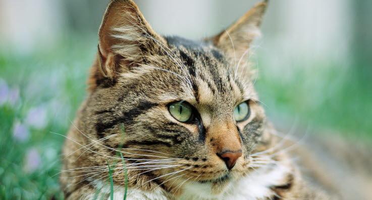 uttorkad katt symptom