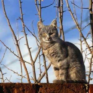 kastrera katt pris