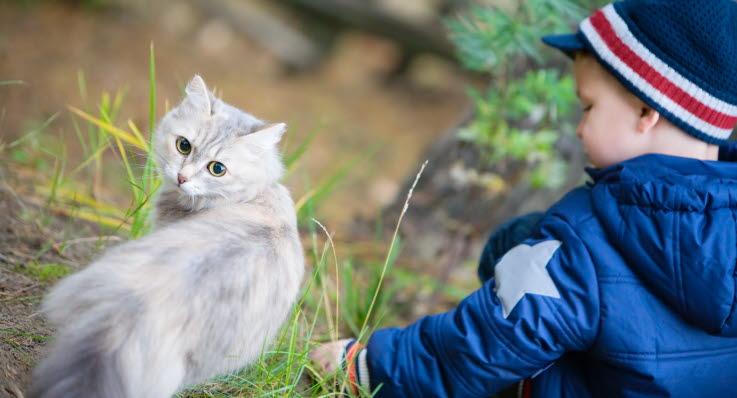 blötmat katt hur ofta