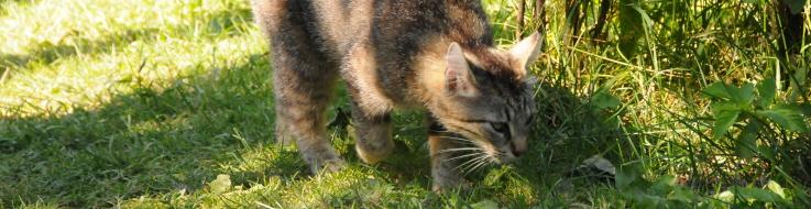 Katt som nosar på växter i rabatten.