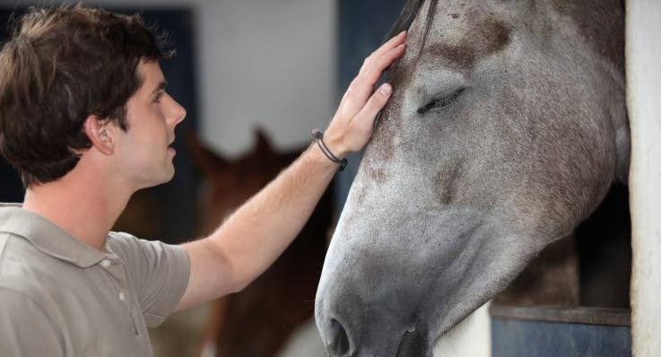 Häst blir klappad på pannan av ung man