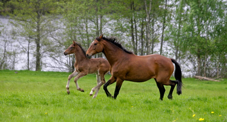 feber häst orsak