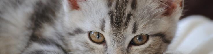 Vomissements chats